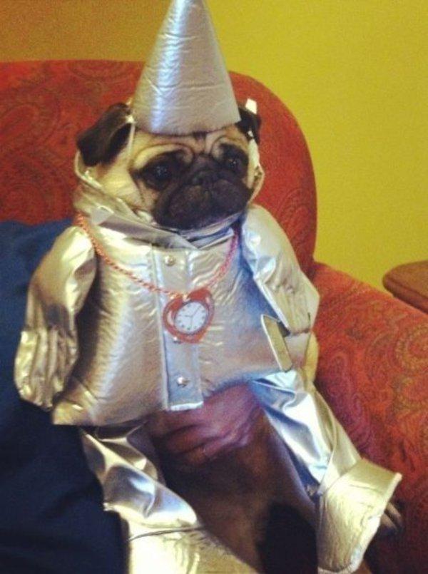 31個可愛爆笑的萬聖節寵物裝扮,怎麼比人類的還要專業?!