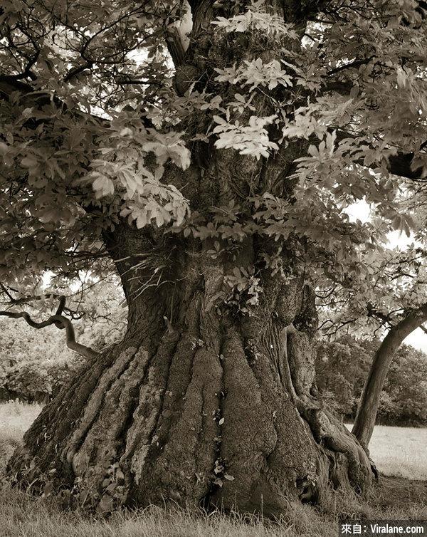 這女人花了整整14年時間,只為拍攝全世界最古老的樹木,效果太震撼了!