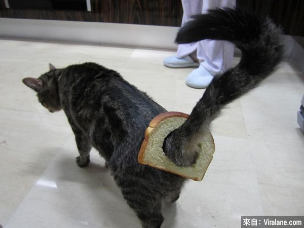 這些小貓絕對需要人類一句道歉!