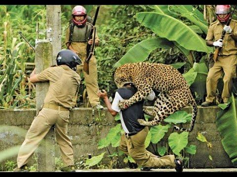 Vildt! Leopard angriber turist på safari
