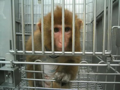 peores empresas animales (1)