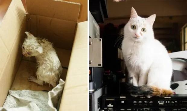 gatitos lastimados (9)