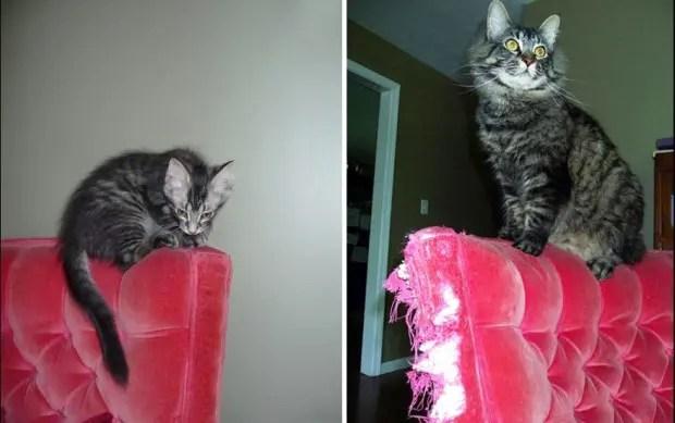 gatos creciendo (5)