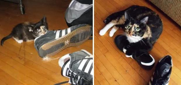 gatos creciendo (6)