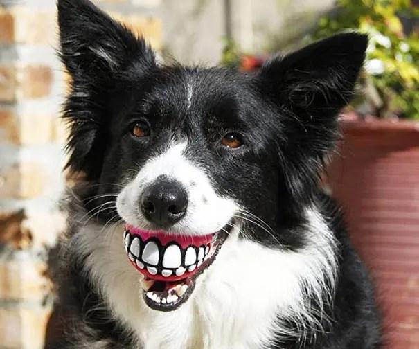 juguetes de perro graciosos (7)