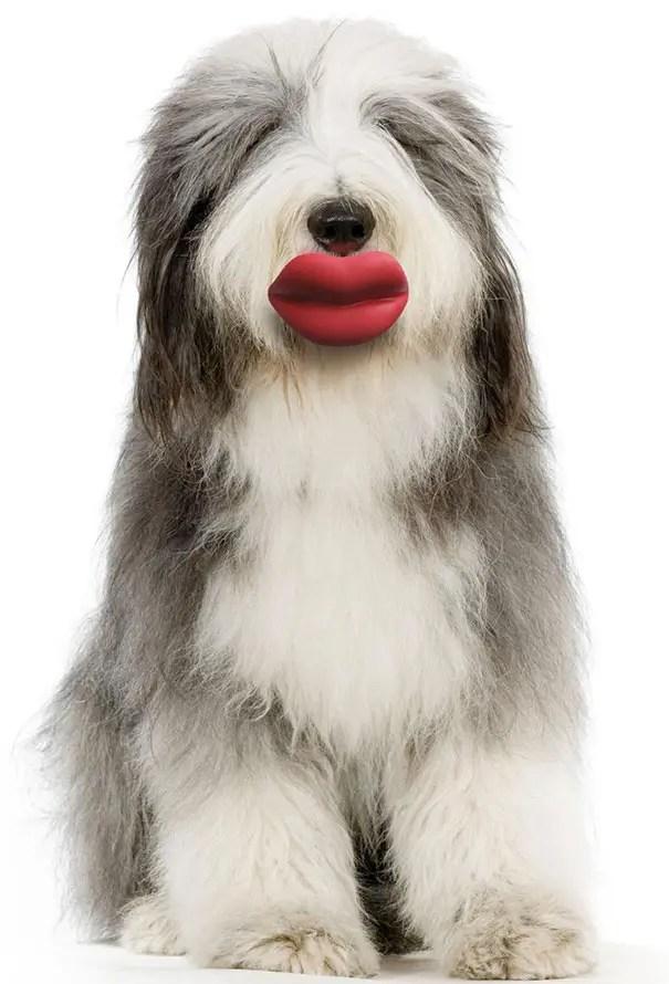 juguetes de perro graciosos (9)