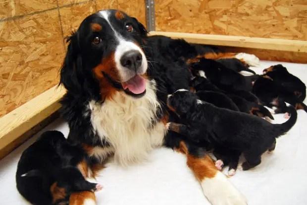 maternidad-animales-07