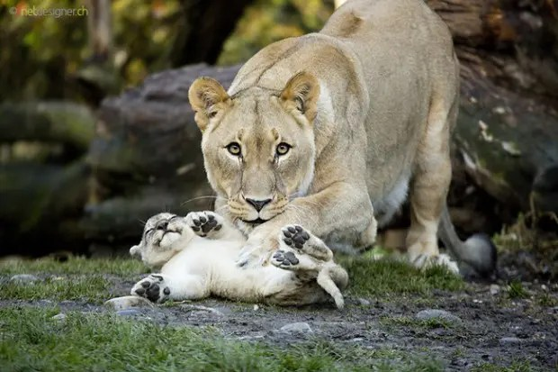 maternidad-animales-18