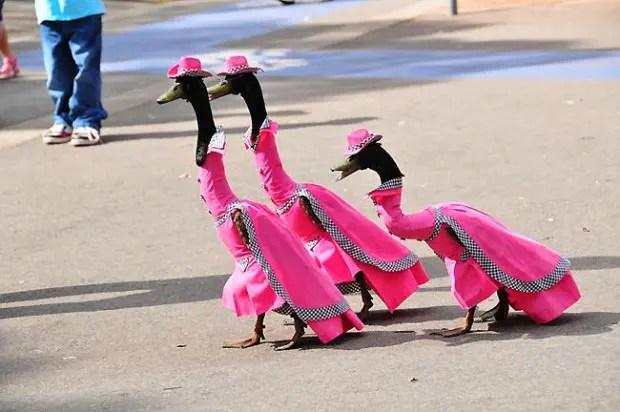 duck_pato_disfraz_desfile1