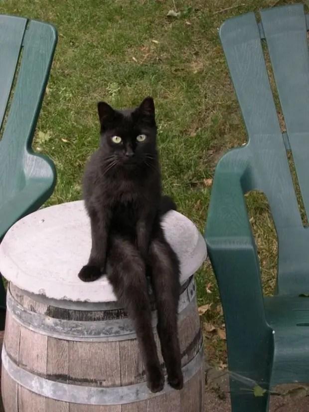 gatos rebeldes sentados1