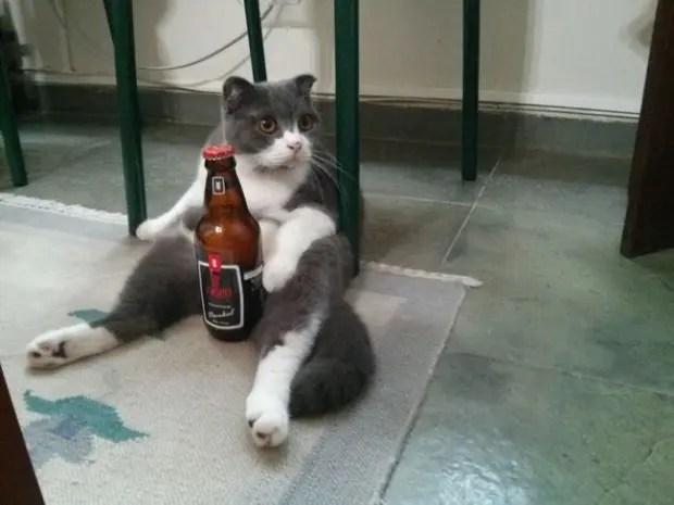 gatos rebeldes sentados3