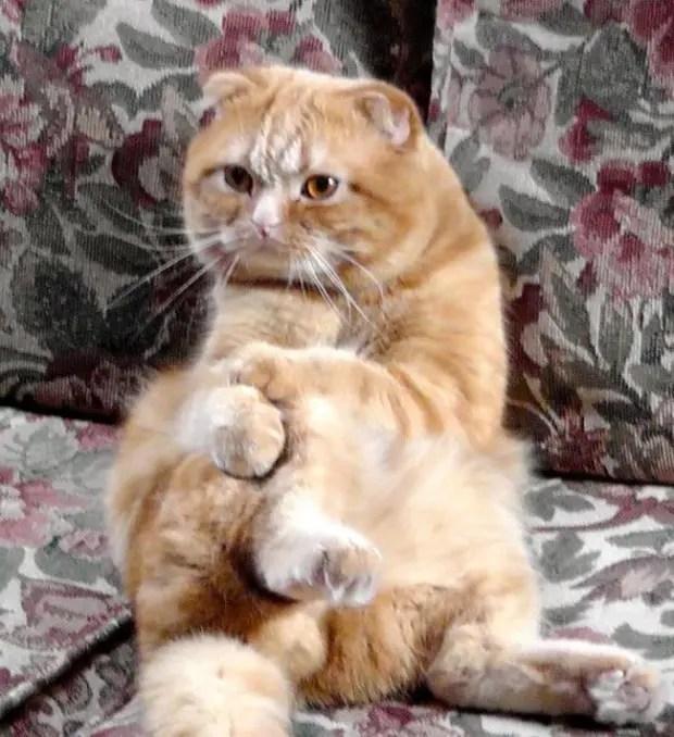 gatos rebeldes sentados9