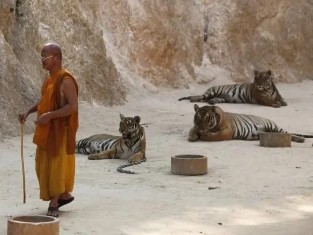 tigres786