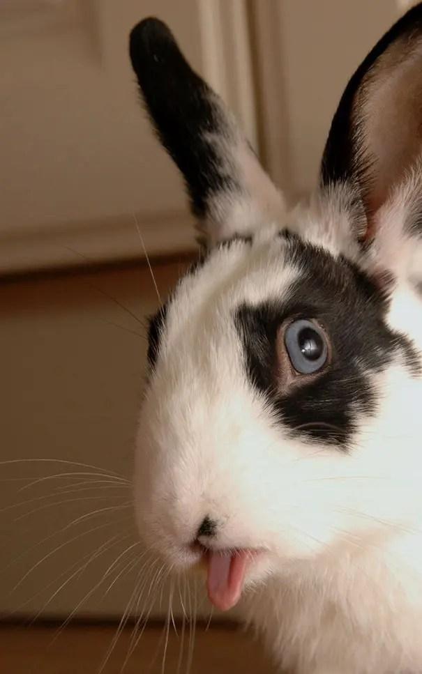 Bunnies9