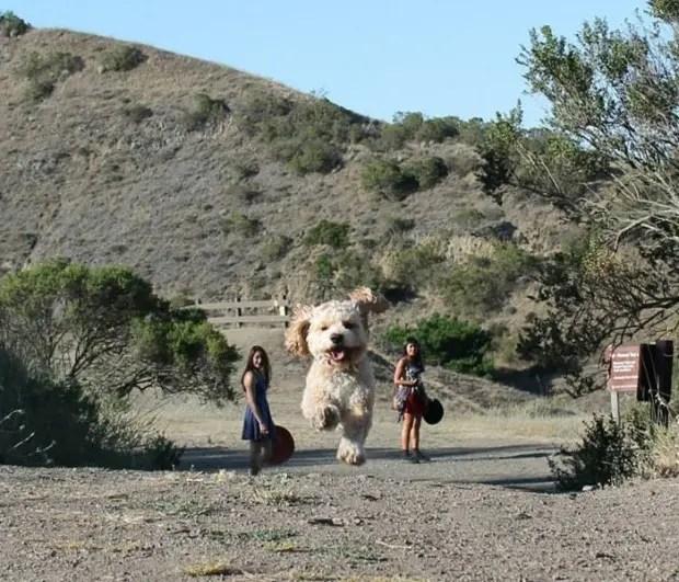 Perro-parece-oso