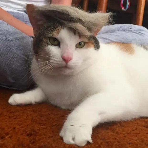 Trumpcat2