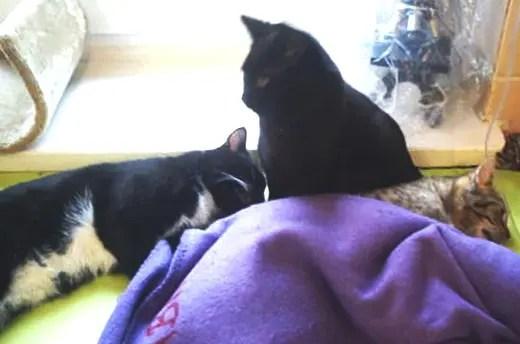 gato-negro-enfermero-compasion