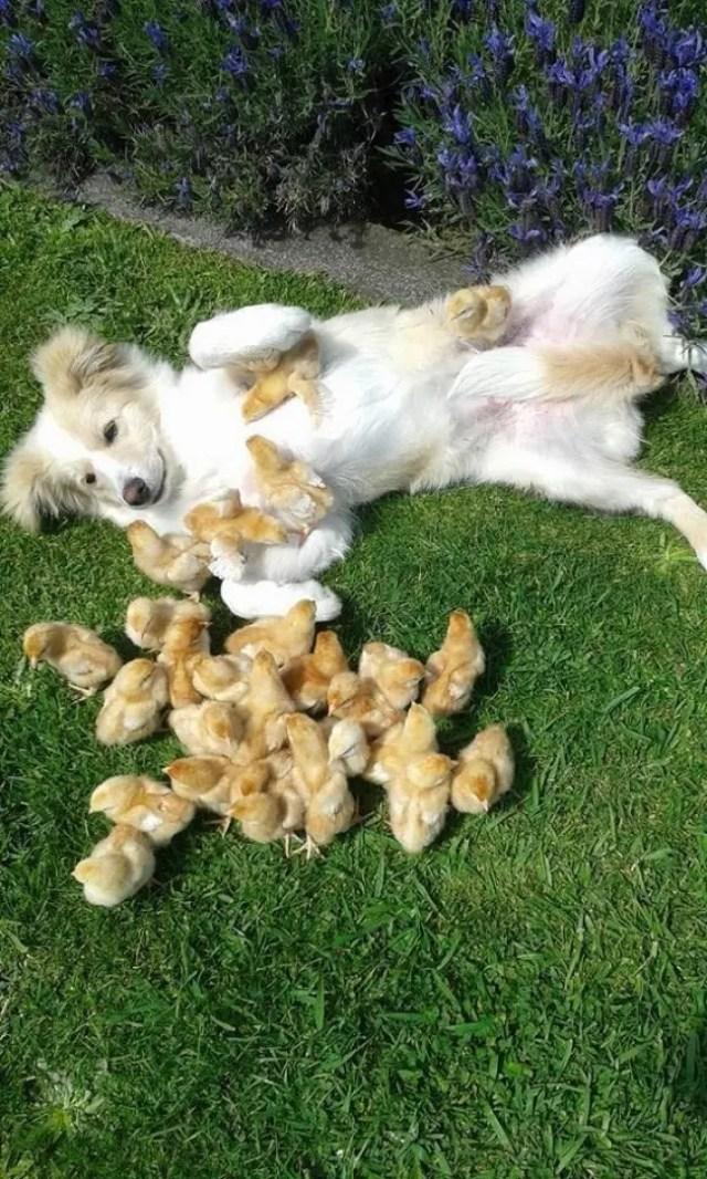 animales contentos 12
