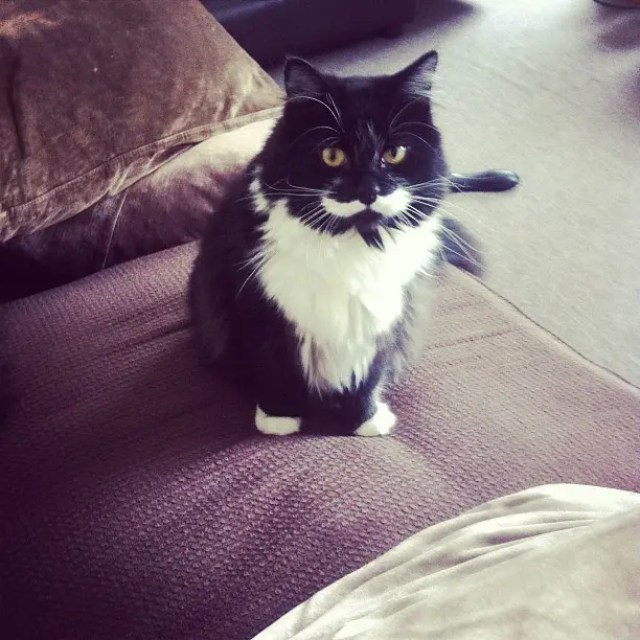gatos con bigote 11