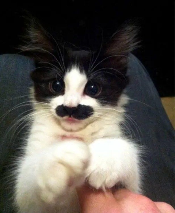gatos con bigote 2