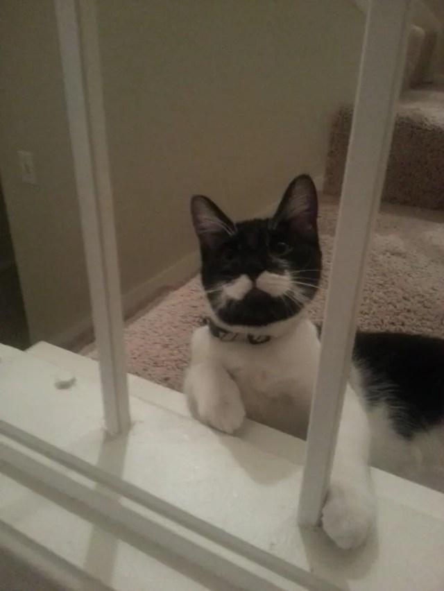 gatos con bigote 7