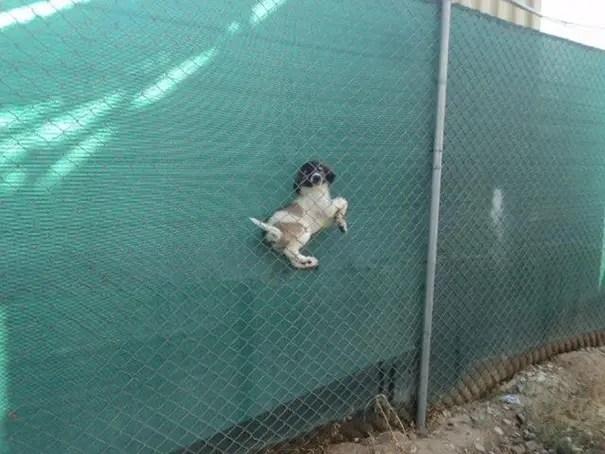 fails de perros 8