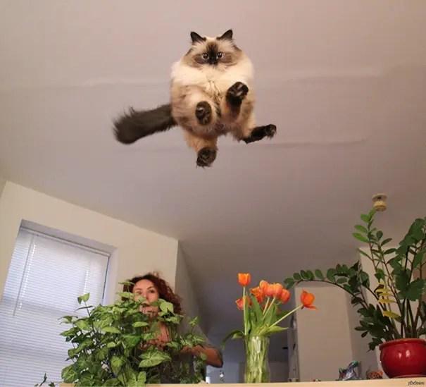 momento preciso gatos 14