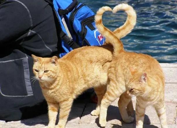 momento preciso gatos 2