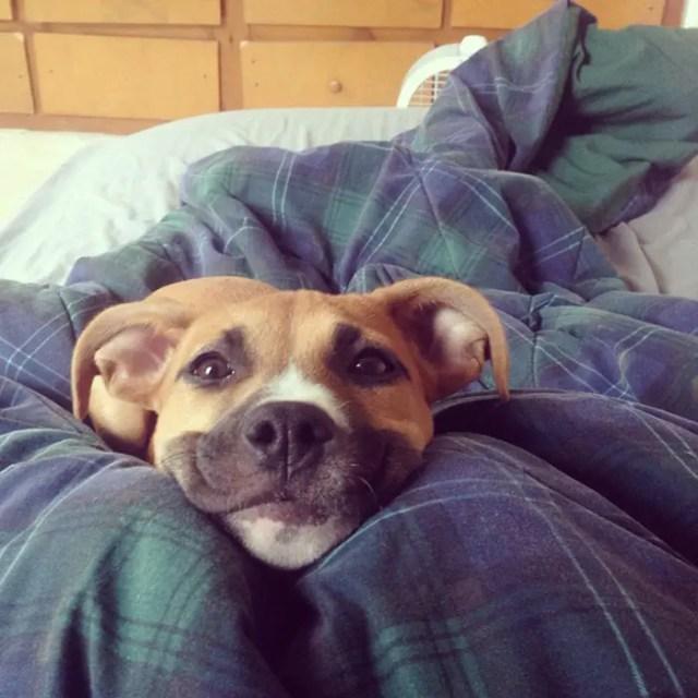 sonrisas de perros 7