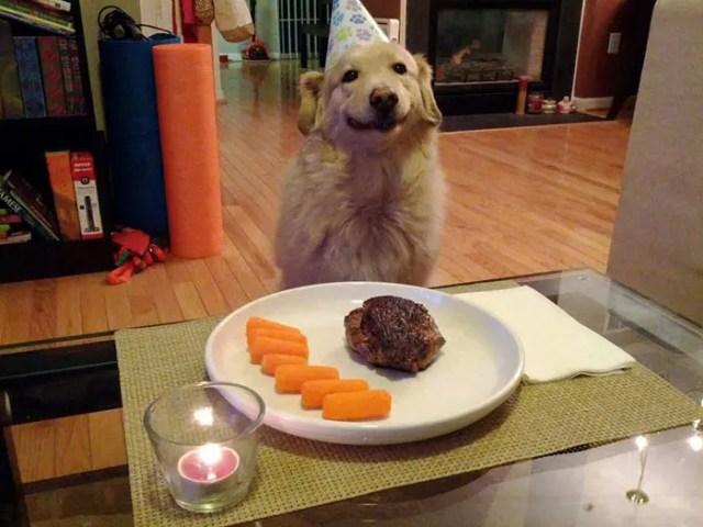 sonrisas de perros 9