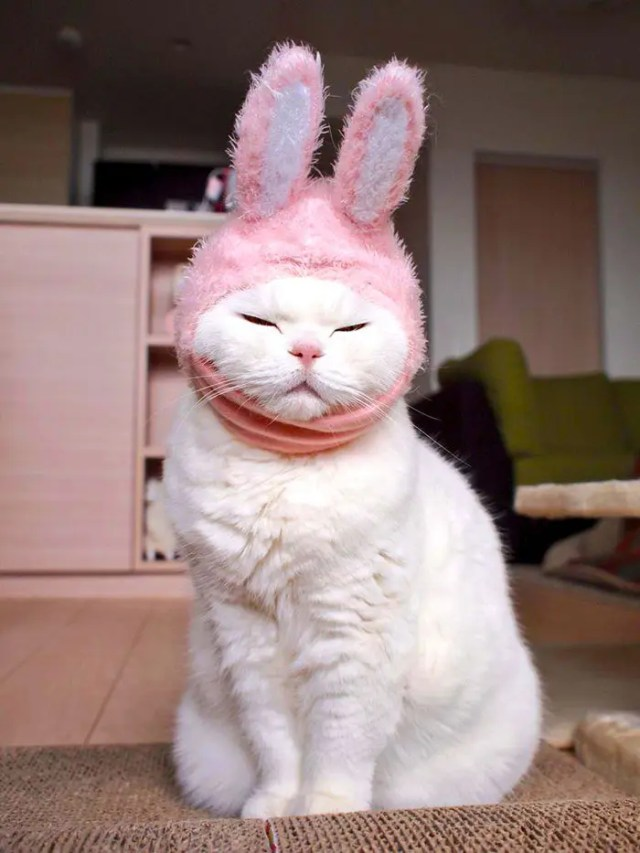 gato flojo 1