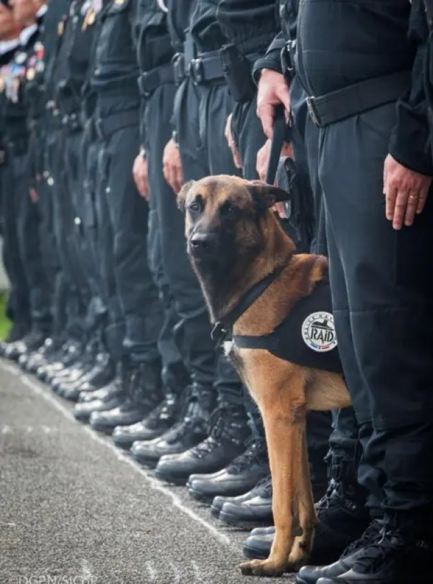 muerte-de-perro-policia-paris-redada1