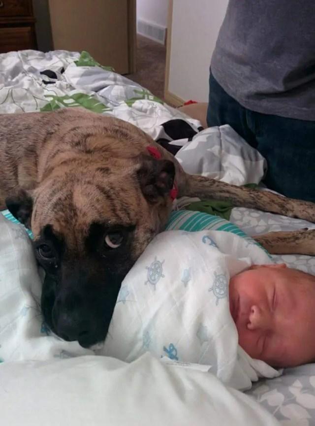 perritos-con-bebes-14