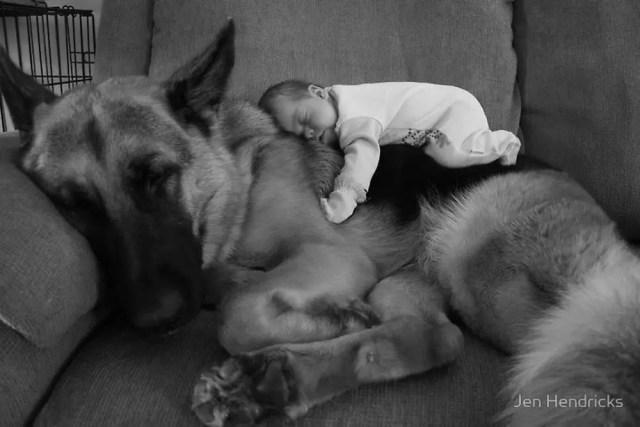 perritos-con-bebes-25