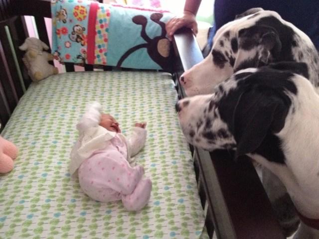 perritos-con-bebes-4