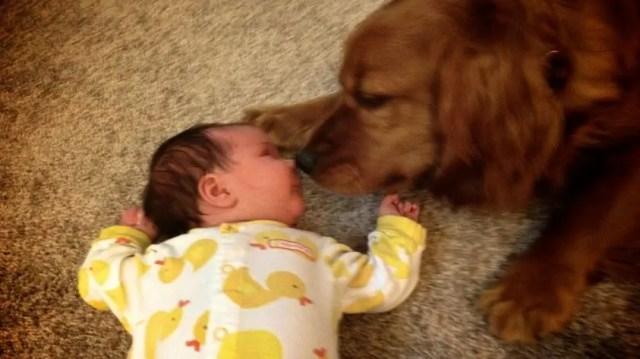 perritos-con-bebes-8
