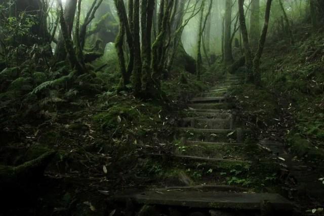 bellos bosques 9