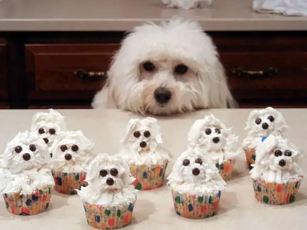cupcakes 17