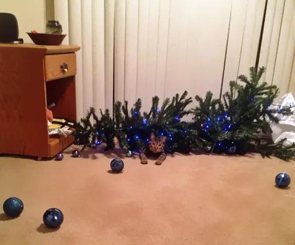 gatos-decorando-arbol-de-navidad3