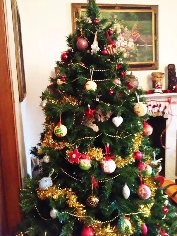 gatos-decorando-arbol-de-navidad7