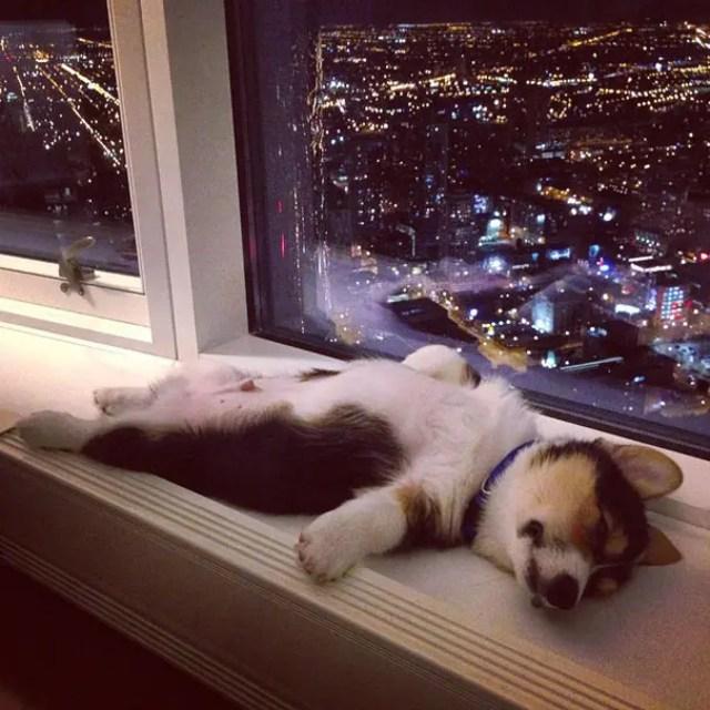 animales dormidos lol 8