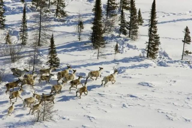 animales jugando en nieve 3