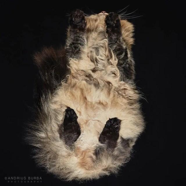 bajo gatos 6