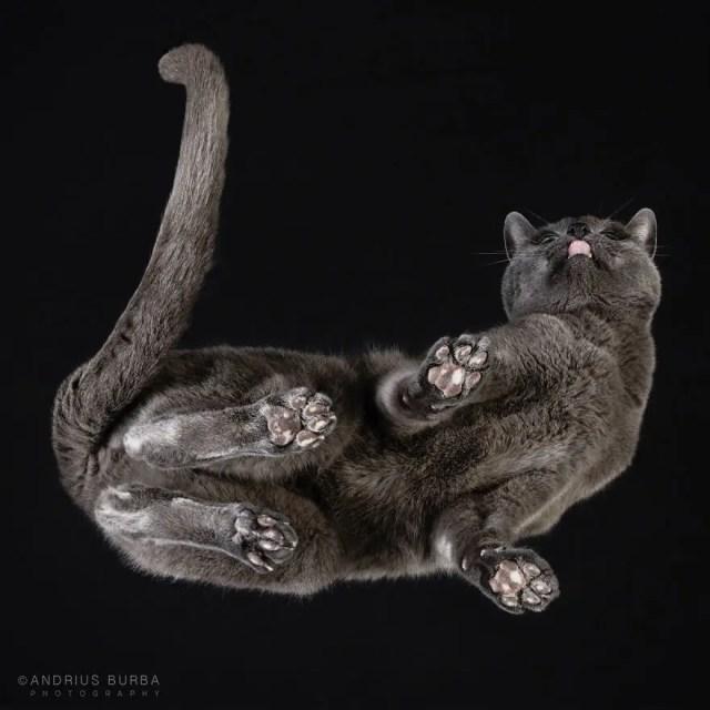 bajo gatos 7