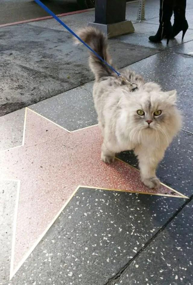 gandalf el gato 4