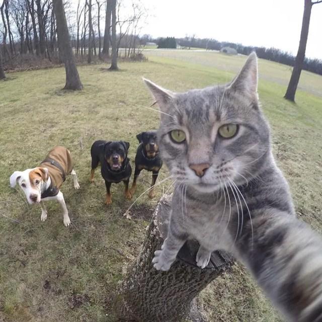 gato selfie 3