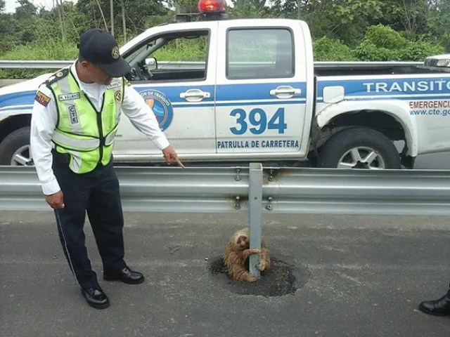 pereza-carretera-policia1