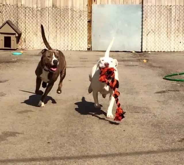 perro-refugio-sordo1