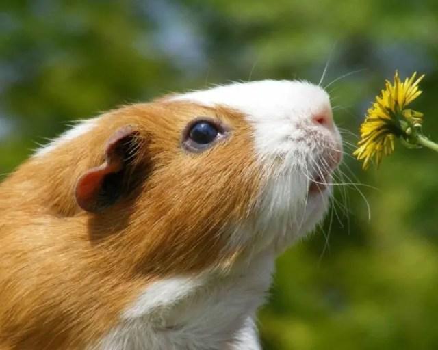 animales-oliendo-flores-31