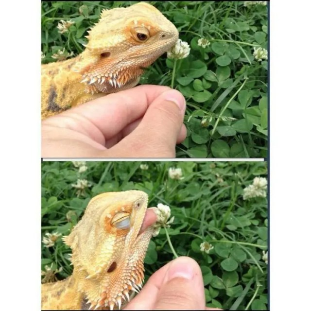 animales-oliendo-flores-8